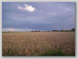 De tarwe oogst Zeeland.